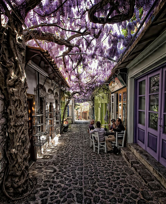 154 Of The World's Most Magical Streets Shaded By Flowers And Trees