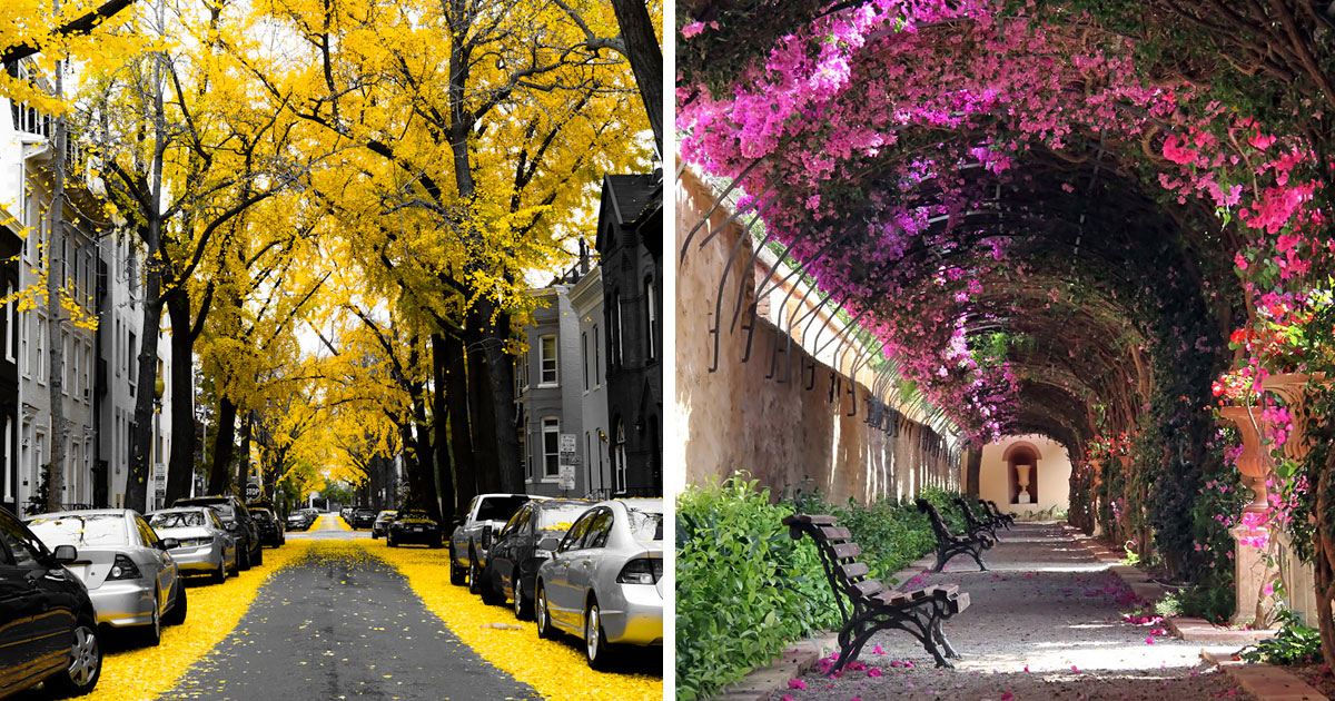 15+ Of The World's Most Magical Streets Shaded By Flowers And Trees