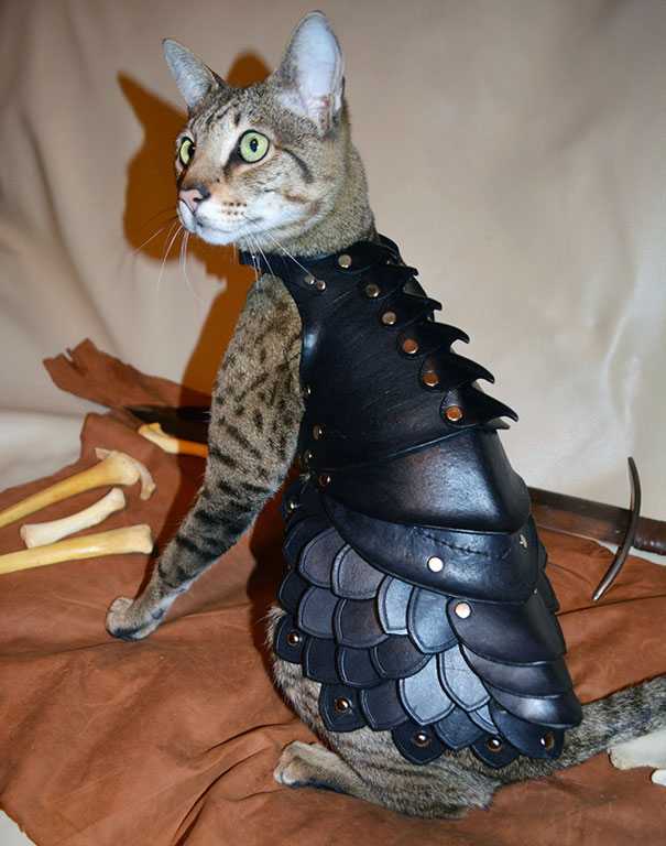 black-leather-cat-armor-schnabuble-1