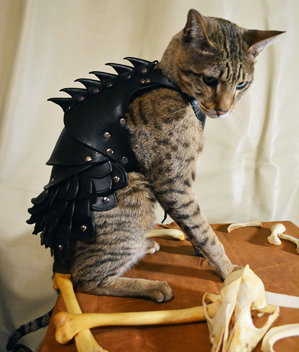 black-leather-cat-armor-schnabuble-2