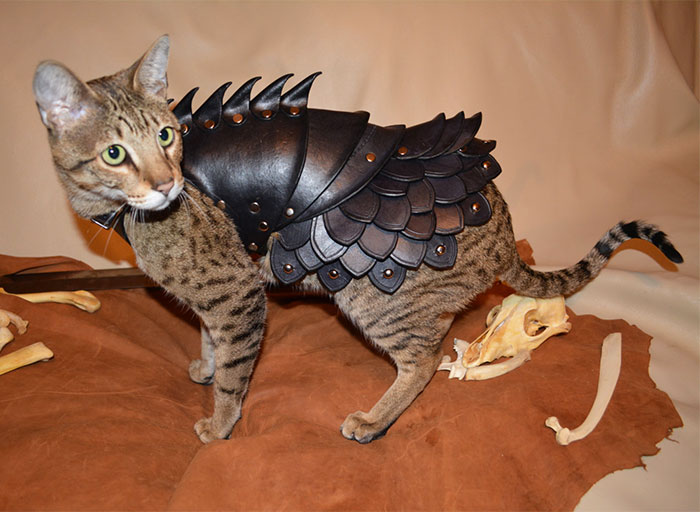 This Leather Cat Battle Armor Will Help Felines Enslave Humanity