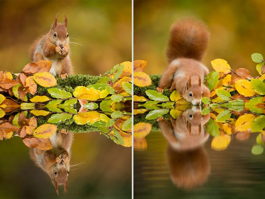 cute-animal-photography-edwin-kats-17