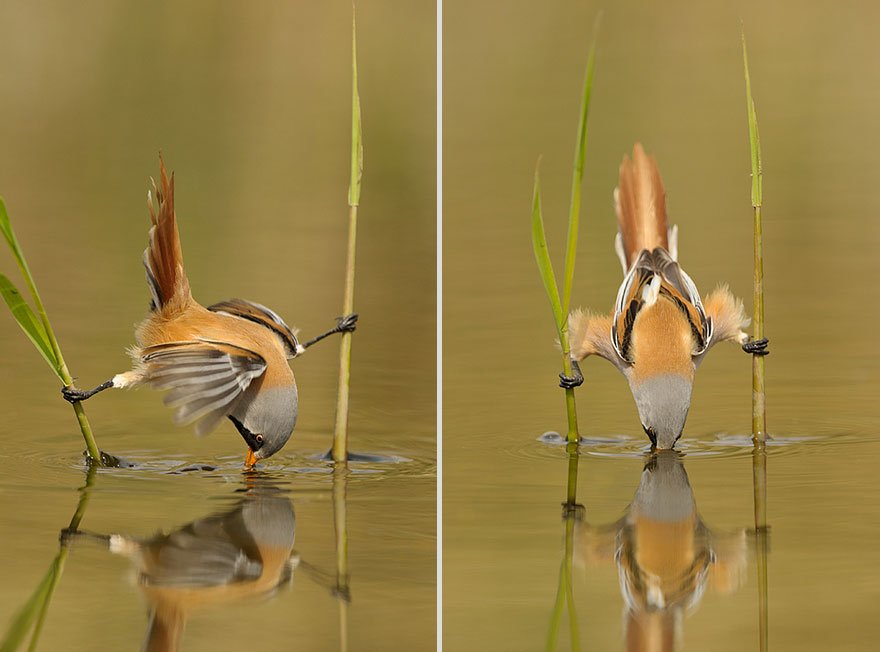 Cute Animal Photographer Edwin Kats