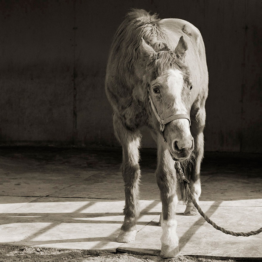 elderly-animals-isa-leshko-1
