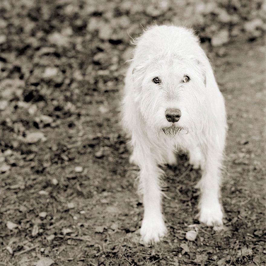 elderly-animals-isa-leshko-11
