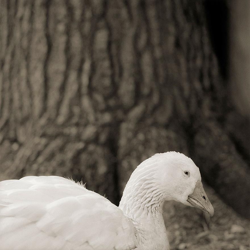 elderly-animals-isa-leshko-20