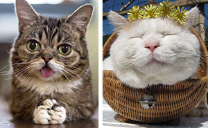 20+ Of The Most Famous Cats On The Internet