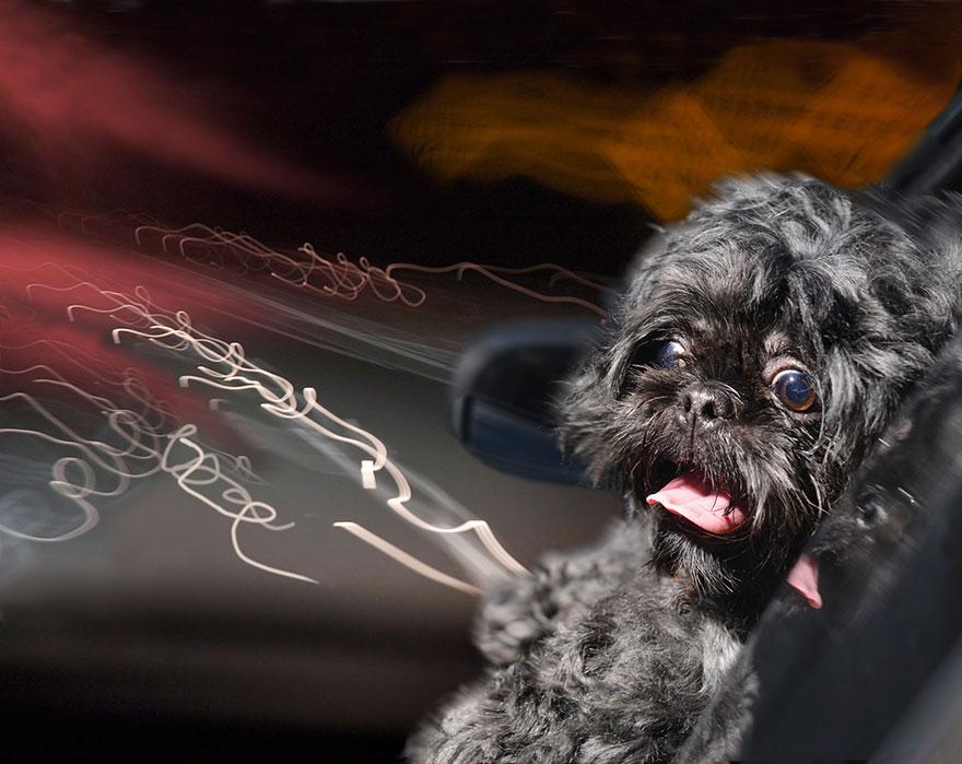 funny-dogs-in-cars-lara-jo-regan-6