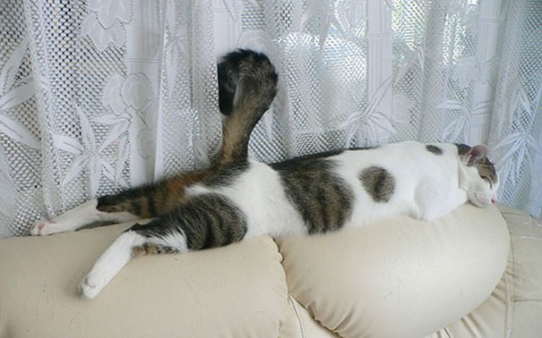 Funny Cats In Hilarious Sleeping Positions