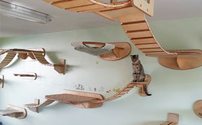 Rooms Transformed Into Overhead Cat Playgrounds With Walkways And Platforms