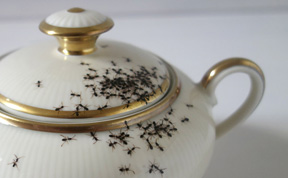 Elegant Porcelain Crawling With Creepy Hand-Painted Ants by Evelyn Bracklow