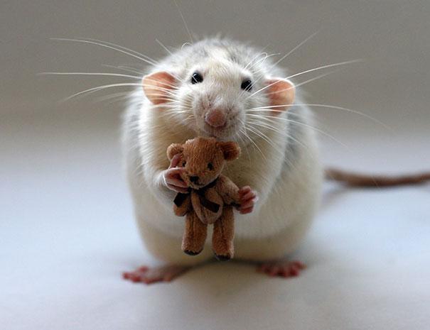 rats-with-teddy-bears-ellen-van-deelen-2