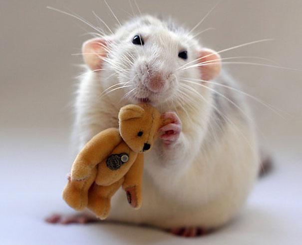 rats-with-teddy-bears-ellen-van-deelen-5