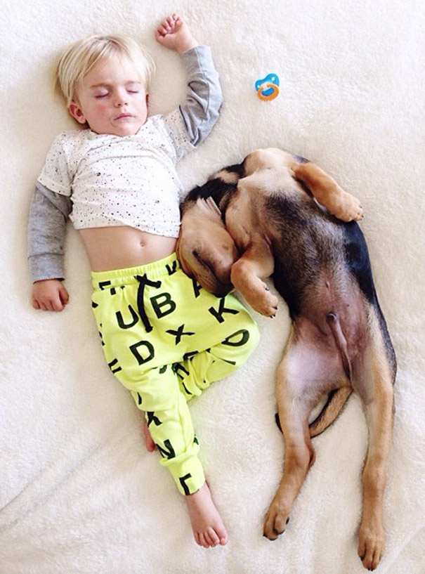 toddler-naps-with-puppy-theo-and-beau-2-12