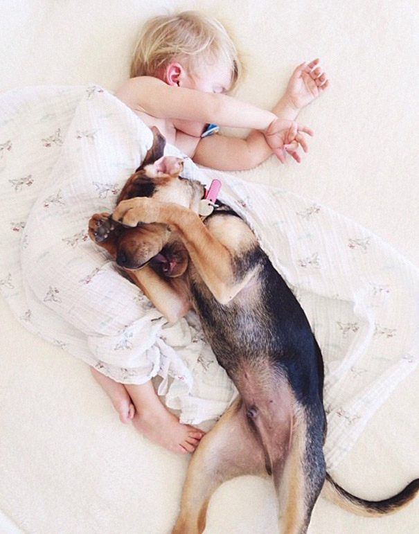 toddler-naps-with-puppy-theo-and-beau-2-14