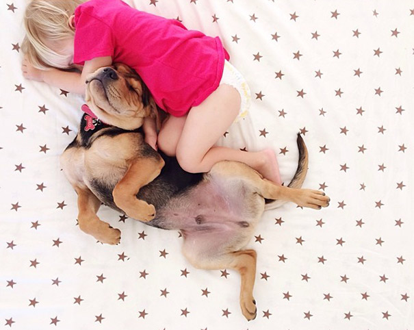 toddler-naps-with-puppy-theo-and-beau-2-15