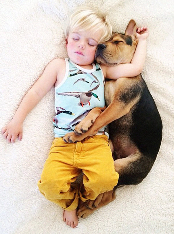 toddler-naps-with-puppy-theo-and-beau-2-18
