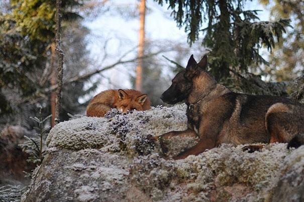 unusual-animal-friendship-1-6
