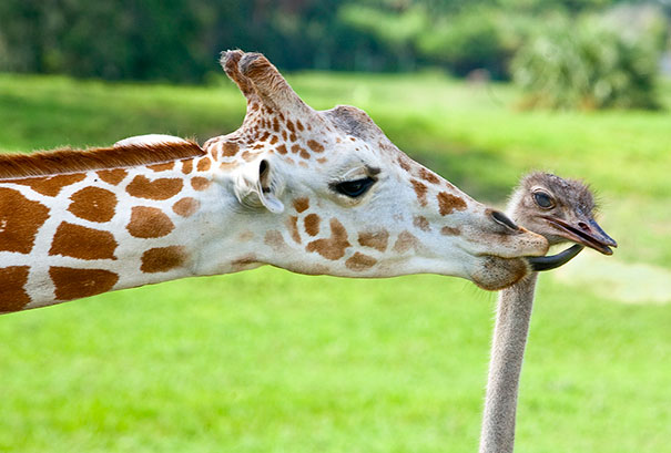 Image result for funny animal pairs