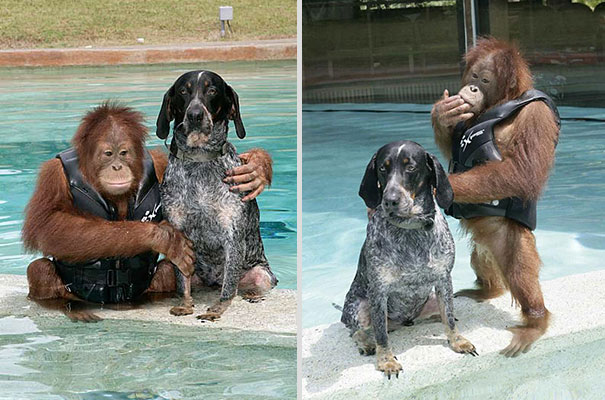 unusual-animal-friendship-13-5