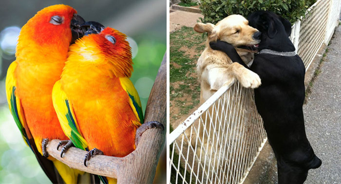 93 Animal Couples That Prove Love Exists In The Animal Kingdom Too