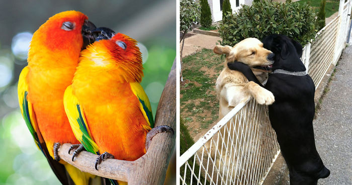 10 animal couples that prove love exists in the animal kingdom too