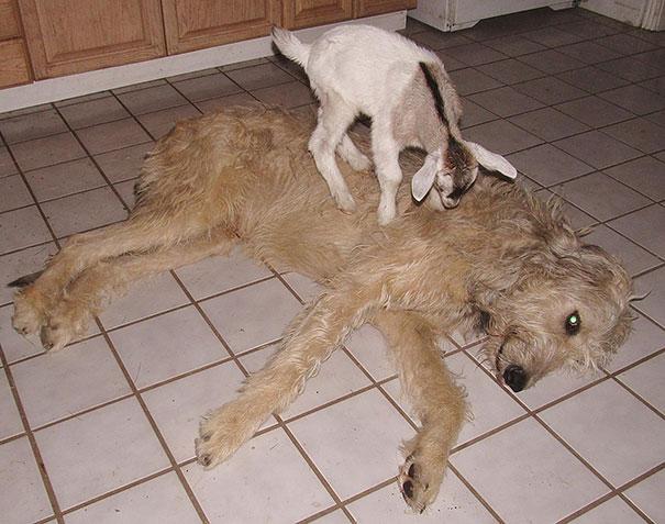 animal-friendship-at-rocky-ridge-refuge-27