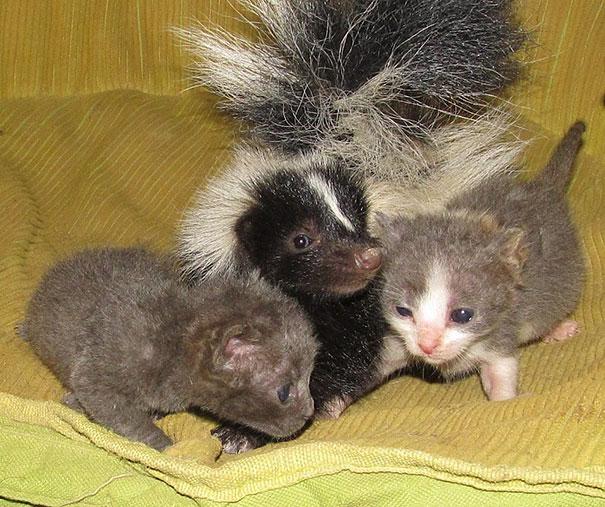 animal-friendship-at-rocky-ridge-refuge-28