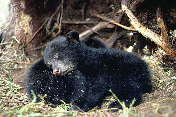cute-animals-sleeping-pillows-1
