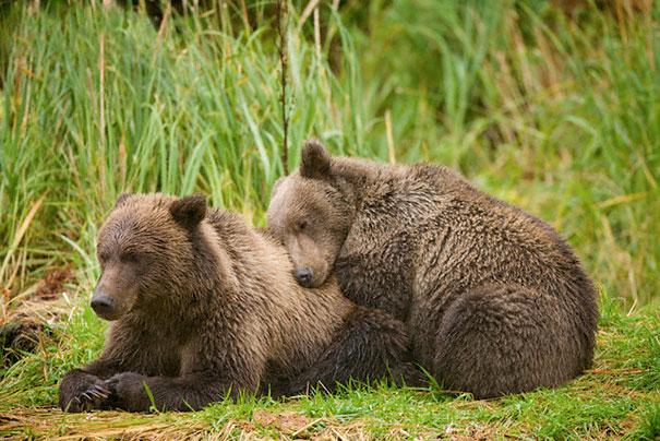 cute-animals-sleeping-pillows-10