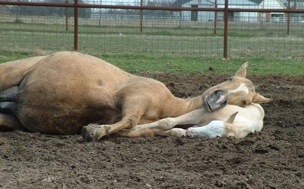cute-animals-sleeping-pillows-16