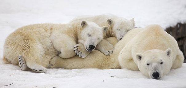 cute-animals-sleeping-pillows-18