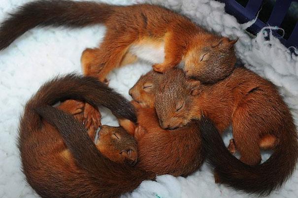 cute-animals-sleeping-pillows-2