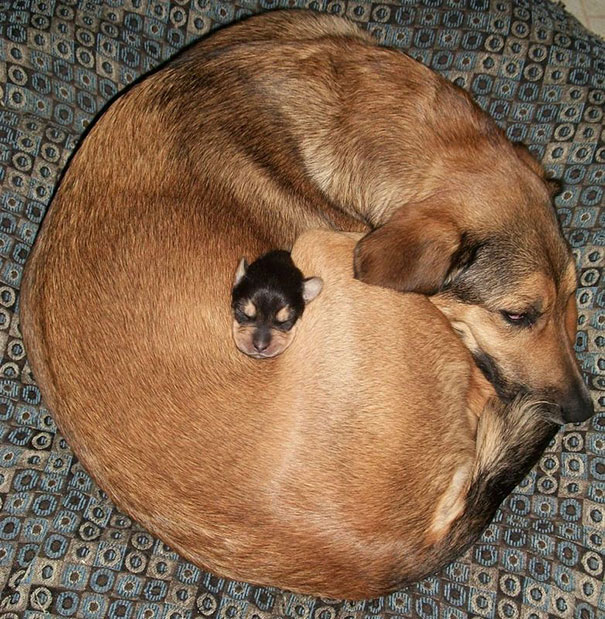 cute-animals-sleeping-pillows-20