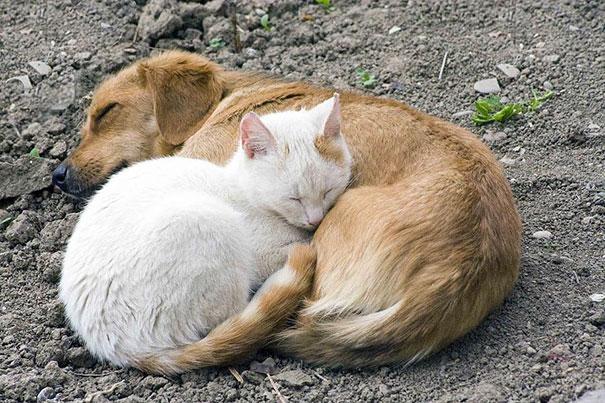 cute-animals-sleeping-pillows-21