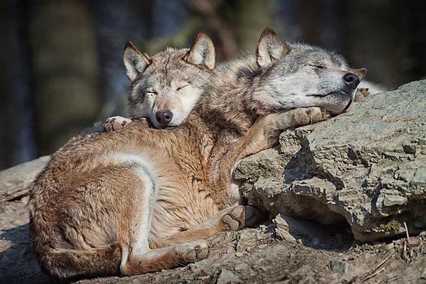 cute-animals-sleeping-pillows-22