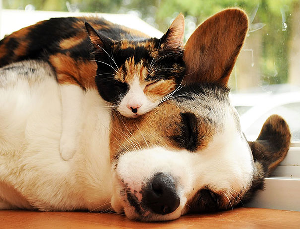 cute-animals-sleeping-pillows-23