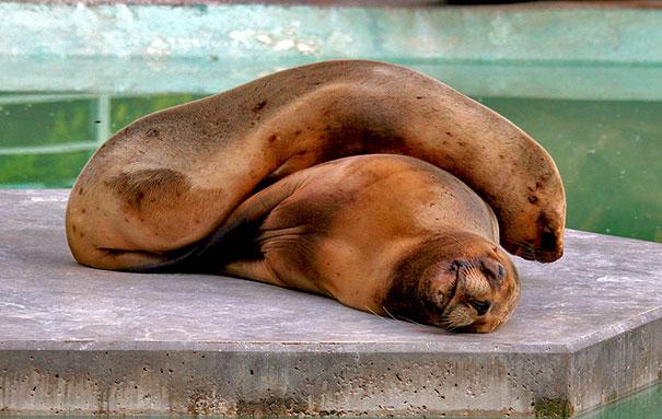 cute-animals-sleeping-pillows-25