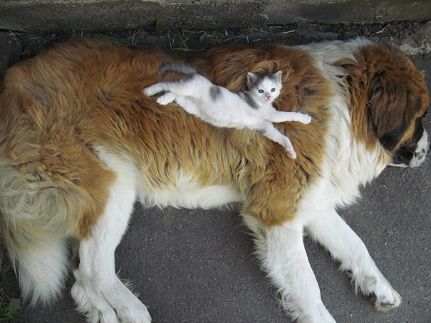cute-animals-sleeping-pillows-28