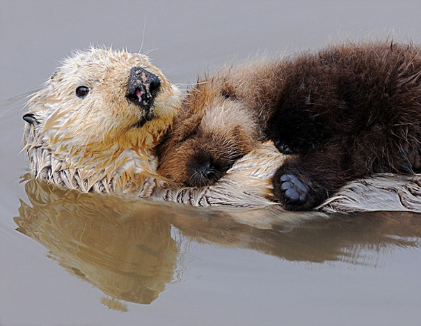 31 Animals That Use Each Other As Pillows | Bored Panda