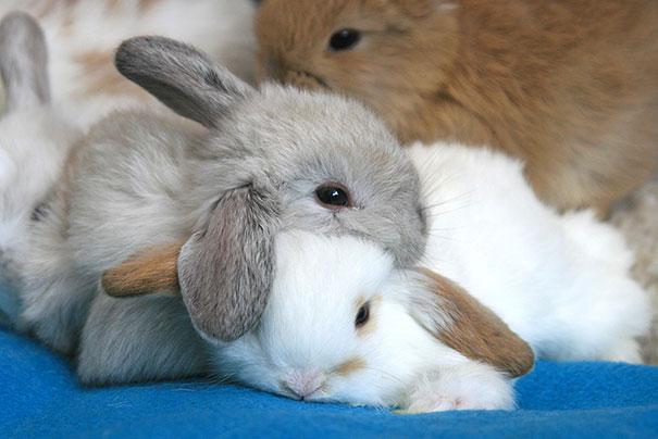 cute-animals-sleeping-pillows-9