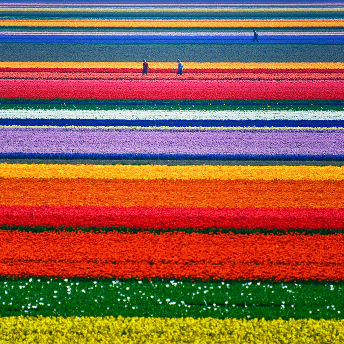 15 Incredibly Colorful Spring Flower Fields Around The World Bored