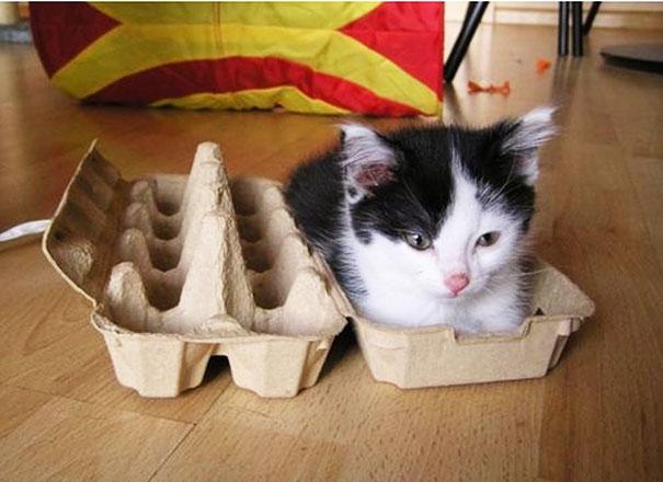 funny-cats-if-it-fits-i-sits-13