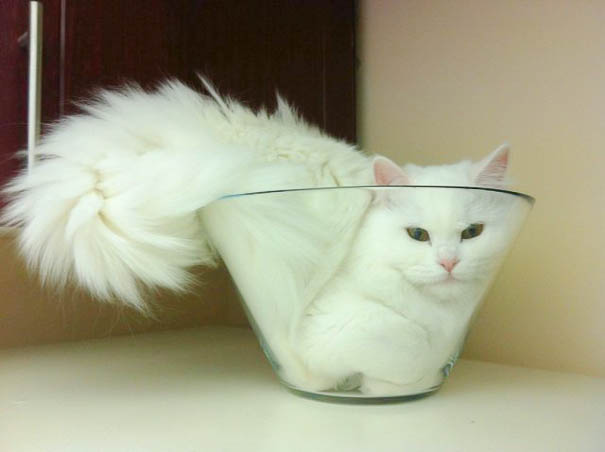 [Image: funny-cats-if-it-fits-i-sits-21.jpg]