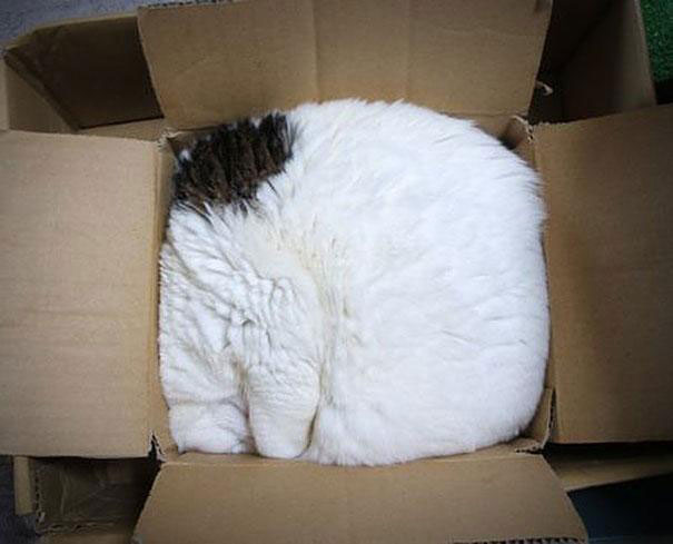 If It Fits I Sits These 21 Cats Prove That No Space Is Too Tight