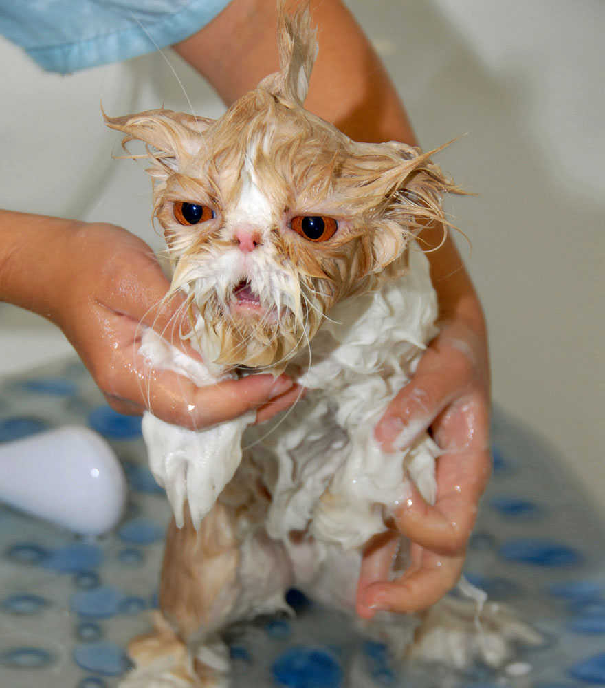 22 Hilarious Pictures Of Wet Cats | Bored Panda
