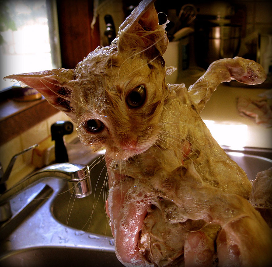 cat villagers acnl