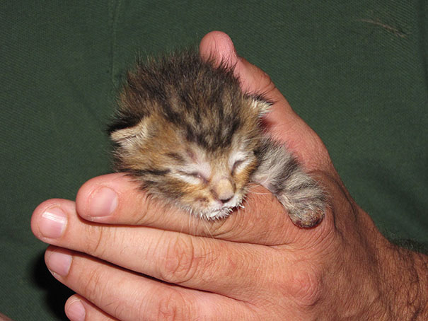mercury-two-legged-kitten-15