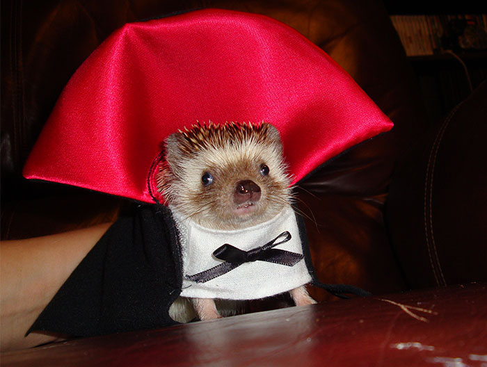 151 Terrifyingly Cute Halloween Costumes For Pets