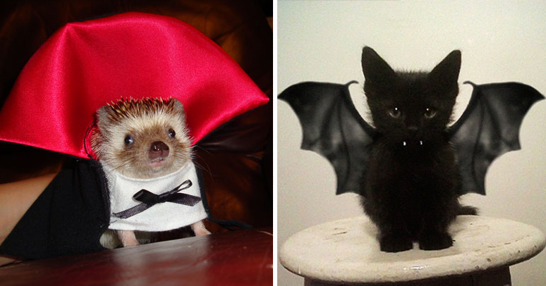 & 25+ Terrifyingly Cute Halloween Costumes For Pets | Bored Panda